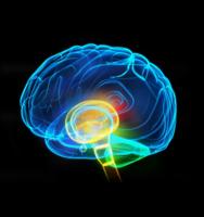 brain-outline